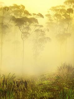 雾里的植物图片背景素材