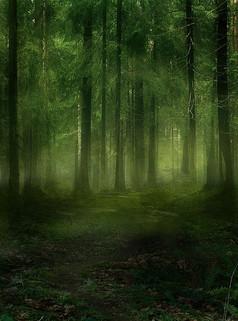 阴森恐怖的森林图片背景素材
