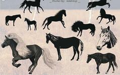 各种马的PS笔刷