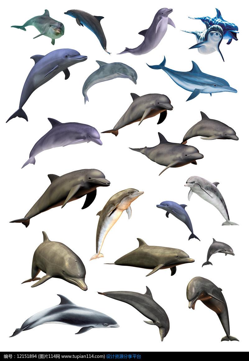 各种各样的海豚png素材