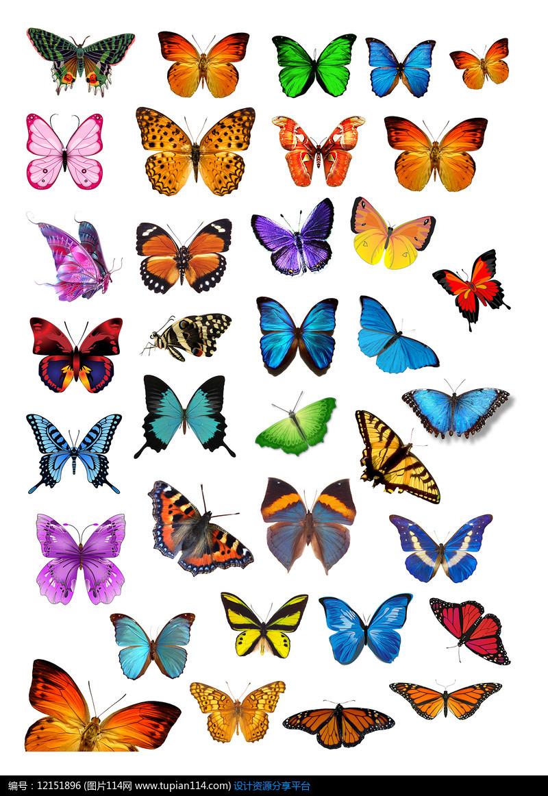 各种各样的蝴蝶png素材