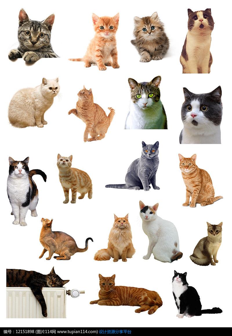 各种各样的猫猫ng素材